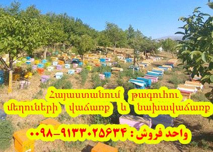 Հայաստանում թագուհու մեղուների վաճառք և նախավաճառք