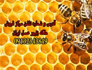 آدرس و شماره تلفن مرکز فروش ملکه زنبور عسل ایران