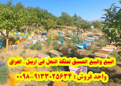 البيع والبيع المسبق لملكة النحل في اربيل ، العراق