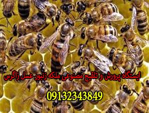 ایستگاه پرورش و تلقیح مصنوعی ملکه زنبور عسل زاگرس