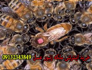 خرید اینترنتی ملکه زنبور عسل