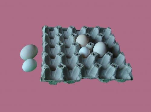 طراحی و ساخت خطوط تولید شانه تخم مرغ و ظروف مقوایی