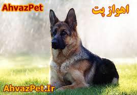 فروش انواع سگ هاي نگهبان