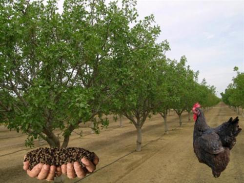 فروش خاص انواع کود مرغ با بهترین کیفیت