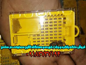 فروش ملکه باکره و جفت خورده و دستگاه تلقیح مصنوعی در سنندج