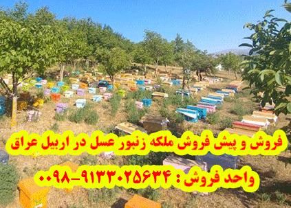 فروش و پیش فروش ملکه زنبور عسل در اربیل عراق
