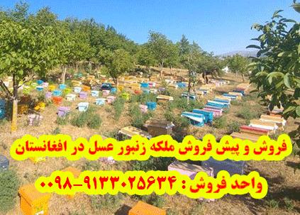 فروش و پیش فروش ملکه زنبور عسل در افغانستان