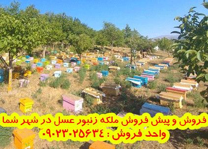 فروش و پیش فروش ملکه زنبور عسل در فارسان