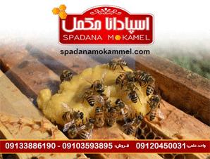 مکمل غذای زنبور عسل اسپادانا - خمیر شیرین F1