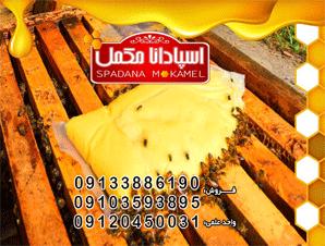 مکمل غذای زنبور عسل اسپادانا - خمیر شیرینF3